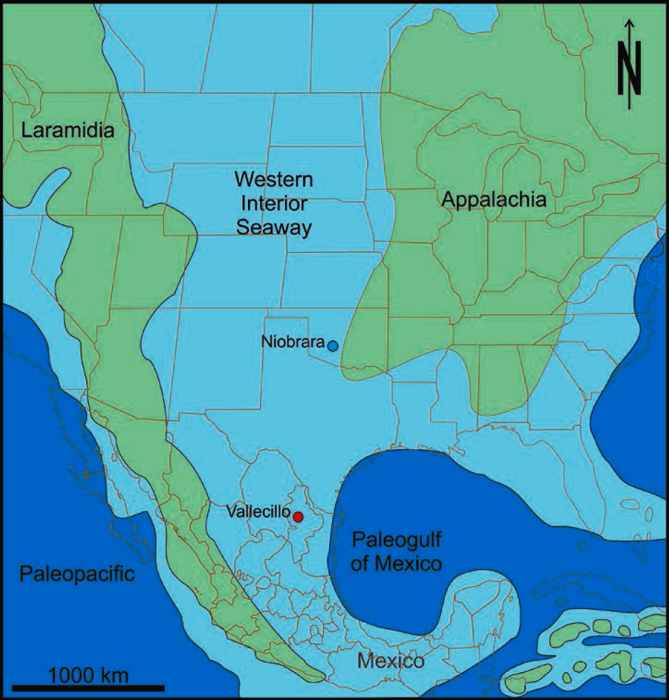 Note That The Western Interior Seaway Is Connected With The Paleogulf Of  Mexico (modified From).