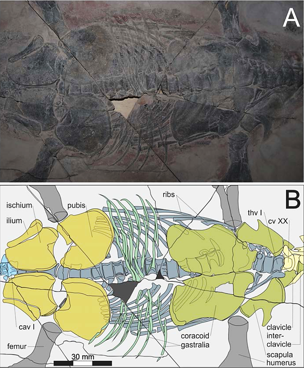 A New Polycotylid Plesiosaur With Extensive Soft Tissue Preservation